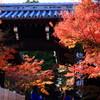 京都・光明寺の紅葉