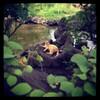 ニャに? #cat #dog #dogstagram #dogoftheday #pom #pomeranian #pomstagram #instapom #ポメラニアン #黒ポメ #犬バカ部