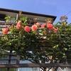 初夏を彩る花々