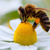 ボキャブラリ不足解消英会話① 「The bee's kees (最高のもの、これ以上ない)」「couldn't be ~(これ以上~なことはない)」