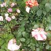 強風で花が折られた