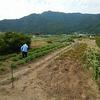 ジャガイモ収穫‥