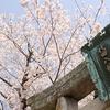 お花見そして琴石山で朝陽を拝む