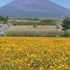 富士山すそのパノラマロード コスモス畑