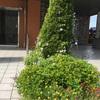 9月10日マンション花壇