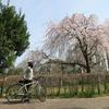 桜サイクリングin静岡市 その3
