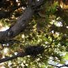 庭の木に作られた鳥の巣【別ブログより】