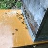 ミツバチが巣に入りました。