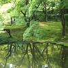 京都府立植物園 青もみじの水鏡