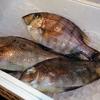 白身魚最強の旨さ!超高級魚「メイチダイ」が感動モノだった件