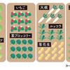 冬に収穫できる野菜を貸し農園で。