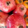 風邪予防に最強の果物、ザクロと柿