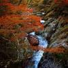 小田深山の紅葉踏み分け鳴く鹿はいなかったが独身アラサーは泣いていた。