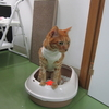 猫さんを迎える準備 トイレ編