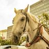 【一日一枚写真】馬車の休憩 Part.3【一眼レフ】