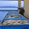 2018年12月7日 小浜漁港 お魚情報