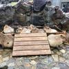 GWカピバラ旅行:雨降りの那須どうぶつ王国篇!