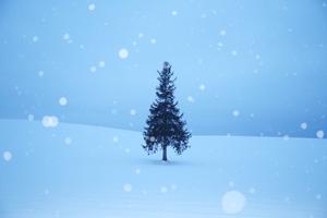 2月 冬の北海道 美瑛 クリスマスツリーの木 天気と表情