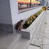 【2017 ヘルシンキ・ビリニュス・リガ】カウナスの駅前で猫に遭遇!