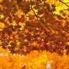 秋の養生【秋はだれもが寂しさを感じやすいけど、季節のせいで良いのです】