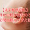 【先天性耳瘻孔】耳から膿が出たので切開出膿してきた話