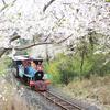 済州島(チェジュ島)4月のおすすめ観光 <済州の春、青春はゆっくりと歩いていく>