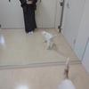【コーディネート例】椿と猫の帯で猫コーデ(3月中旬)