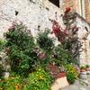 【ミストラとモネンバシア旅行記】1:アテネからスパルタ経由でミストラへ。遺跡内の教会・修道院めぐり