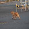 大阪府北部地震の影響で猫ちゃんの脱走が相次ぐ!室内猫でも脱走対策はした方が良い?