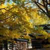 秋色をさがして 亀田八幡宮…