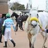 ◆競馬予想◆3/24(日) 特選穴馬&軸馬候補