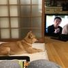 ウランがテレビ見てるよ。