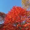 森林公園の紅葉ドライブ【四輪】