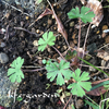 庭で春を待つ植物