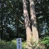 安芸武田氏ゆかりの神社、新羅神社の御神木「夫婦ひのき」です。
