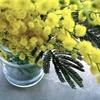 お花を贈り感謝を伝える!3月8日は「ミモザの日」