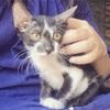 ホイアンひとり旅🇻🇳⑤ホイアンで猫カフェ?🐈
