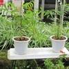 秋田県立農業科学館にニームの木 贈呈