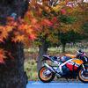 酷道152号縦断の前日、秋のリハビリツーリング