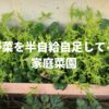 野菜を半自給自足している家庭菜園を紹介してみる