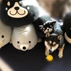【柴犬グッズ・品番】しまむら しばまるグッズまとめ 2019