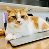 猫って、すごく時間に正確ですよね。(主に腹時計)