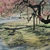 梅の花 #filmphotography