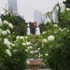 自分勝手に全国都市緑化よこはまフェアで盛り上がる