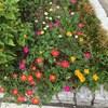 8月25日 の花壇の様子