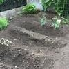 家庭菜園始めました。