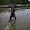 種子島のウナギ露地池