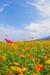 宮崎県の人気の地酒「千徳酒造」のおすすめ日本酒2選(お土産に)