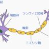 子どもの脳を育てる食事(栄養)。トランス脂肪酸は脳を壊す!