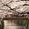 目黒川の桜を撮影:昼編